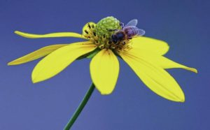 Cedar Bog hosts Mellow Yellow Walk on Sept. 10