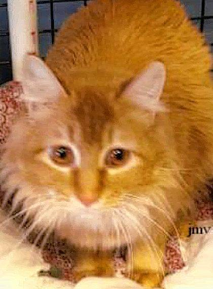 Mango is sweet and playful and waiting for you at PAWS Animal Shelter.